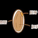 米の仕組み