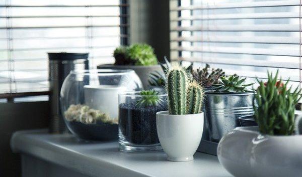 リモートワークする部屋に植物を置くメリット