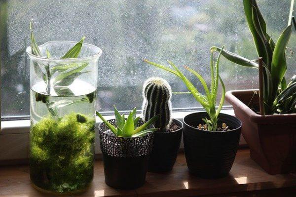 リモートワークの味方!部屋に置く観葉植物のおすすめ3選